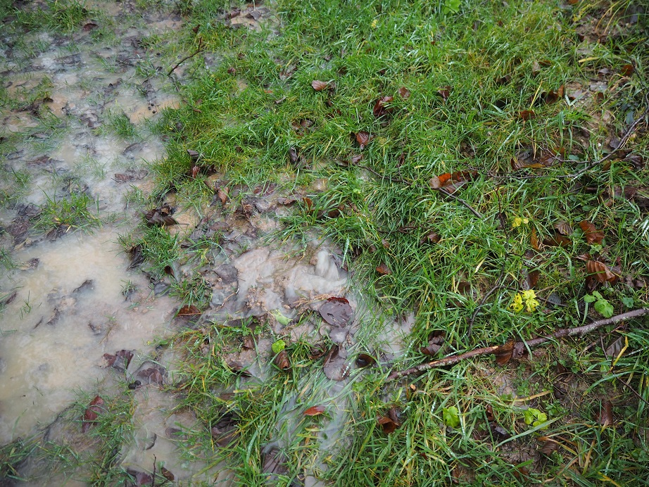 Soggy Ground